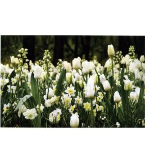 Giardino in bianco  medio