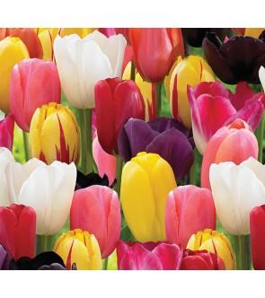 Tulipani Stelo Lungo in...