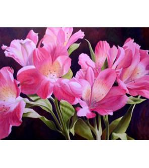 Fresie semplici rosa Rosalinde